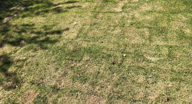 芝刈りの風景です